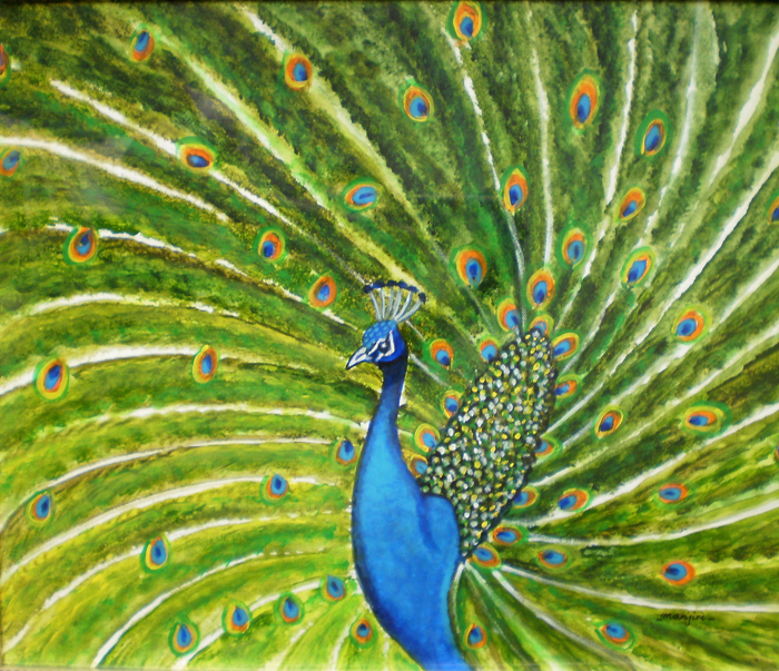 GLORIOUS PEACOCK